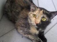 Lizzy's story This beautiful young tortie has been with