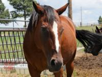 Pasture pet or light riding horse.  Lizzy - is a late