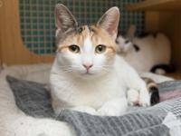 Lo is a seven-month-old calico. My brother Ace is a