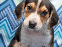 Lobelia's story Lobelia is a young pup looking for a