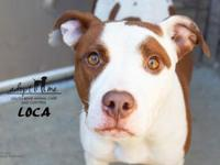 Loca's story Loca's name fits! This feisty girl was