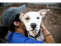 Logan's story Logan is house trained, crate-trained and