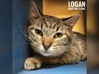 Logan's story Hey there! I'm Logan! I'm gentle, polite,