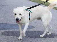 Logan's story Adoption fee for dogs is $95.00 which