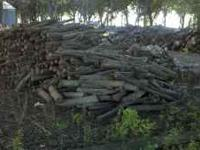I have several piles of maple logs (some walnut and ash