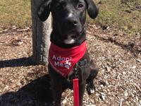 Lois is a sweet and happy 3 year old Lab Mix. She is