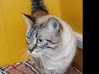 Loki's story Loki is approximately 3-5 years old and is