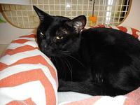 Loki's story Loki is 3 years old & a sweet but shy boy.