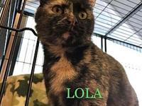 Lola (adult female)'s story Say hello to Lola, a