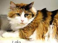 Lola's story Her name is Lola. She's a showy girl. With