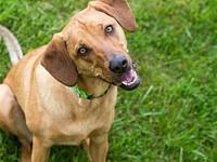 My story Hello! I'm Lola! I love playing fetch with my