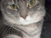 My story Lola is a sweet gray tabby with beautiful