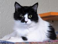 Lolita is a long haired beauty, appropriately named for