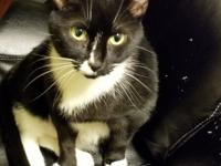 Lolita is a wonderful sweet playful and laid back lap