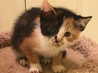 Lollie's story I am a kitten and MAY require another