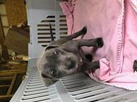London's story London is a female Mountain Cur/Mastiff