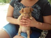 9 week old female pups very sweet playful and