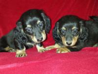 Marley and Bandit had a litter on July 16th and they