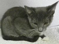 Lonza's story I'm Lonza, a cute 4 month old boy with
