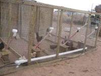 >LOOK MAKE YOUR CHICKEN COOP MORE EFFICIENT AND SIMPLE