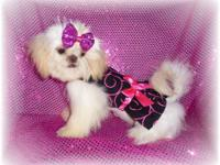 Hello shih tzu breeders. I am looking for a cute little