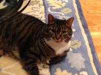 I am trying to find a brand-new home for my tabby cat,