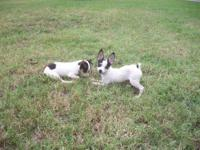 "I have one little Rat Terrier and looking for a ""best"