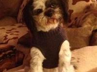 Hello I am looking for a boy yorkie or shih tzu. Both