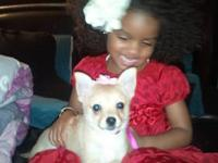 I am seeking a female pomeranian that is at least a