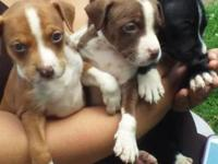 Looking for forever homes for these cute adorable