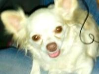 Animal Type: Dogs Breed: Chihuahua she is 4 pounds and