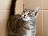 Looking to adopt a cat or kitten? We have many in