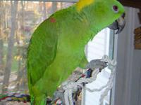 Hello, I am looking to adopt a parrot. Specific breeds