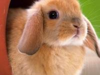 I am looking for a very cute pet rabbit/ bunny.  I'd