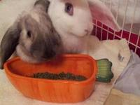 Lop Eared - Happy And Babou - Medium - Young - Female -