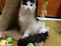 My name is LORELEI. I am a spayed female, white and
