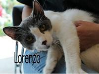 Lorenzo's story The adoption fee is $85.00 with an