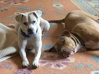 LORI's story She is an adorable 44 lb codependent (must