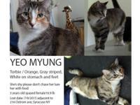 I lost a female cat near 216 ostrom ave syracuse ny
