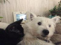 IGLOO IS MISSING WEST HIGHLAND TERRIER WESTIE WHITE