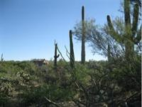Magnificent saguaros, special rock outcroppings and