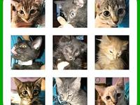 LOTS OF KITTENS's story All kinds and colors of