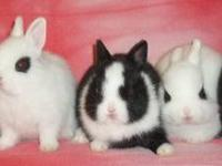 Sweet, adorable, cuddly baby bunnies. They have been