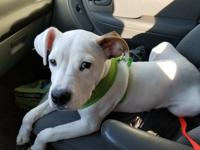 Lotus is a fun loving puppy that came to us emaciated.