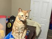 Louie's story Louie is declawed on all four feet, so he
