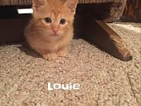 Louie's story Louie is a fun little kitty who would