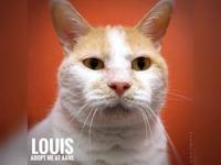 Louis's story Hello! My name is Louis and I'm an older