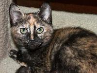 My story Louisa is a lovely tortoiseshell, sweet and