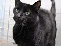 Louise's story Louise is a sweet gentle female cat. She