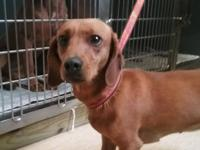 Louise is a fun loving, cuddly little girl approx 2 yrs